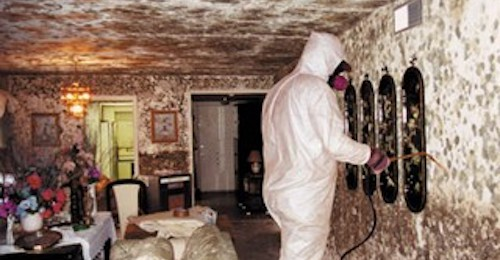 mould removal and remediation biohazard cleaning